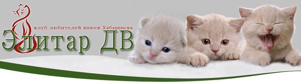 Клуб любителей кошек КЛК ЭЛИТАР